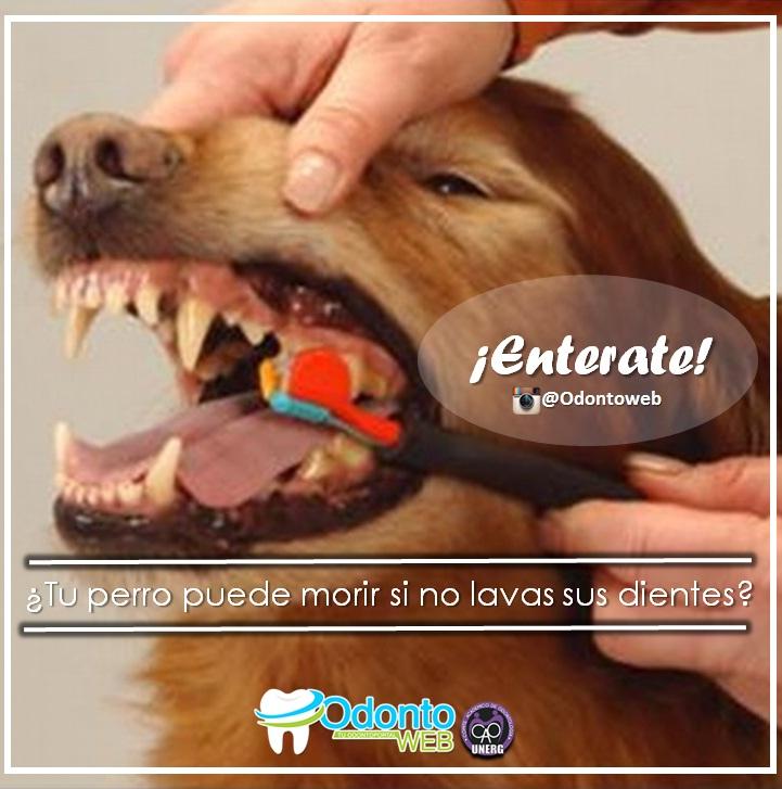 los perros deben cepillarse los dientes